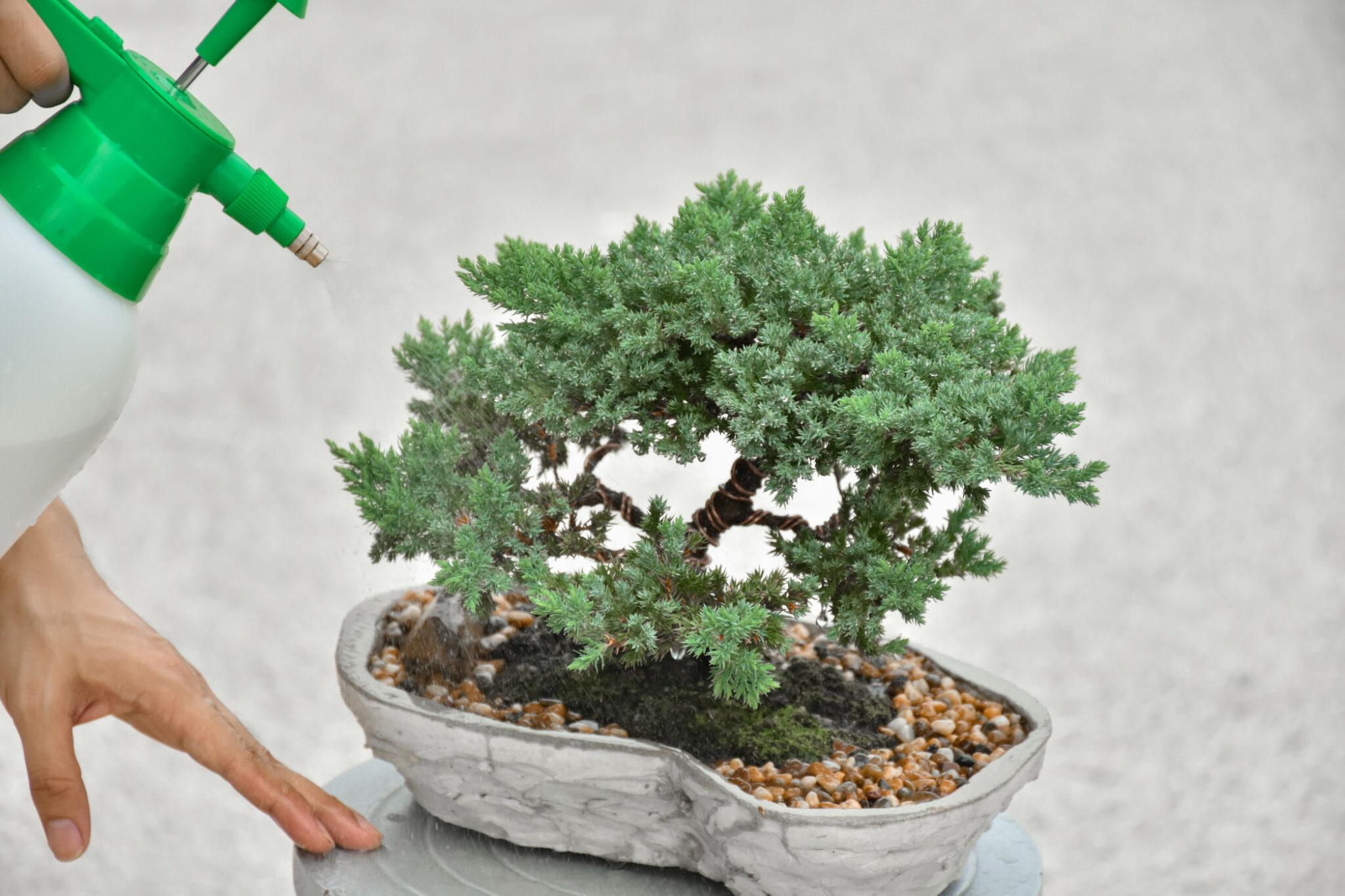 faire pousser des bonsaïs